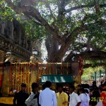 World Famous Bodhi Tree at Bodh Gaya