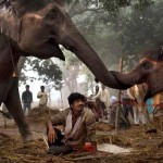 Elephants at Sonepur Fair